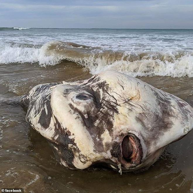 Phát hiện sinh vật khổng lồ trôi dạt vào bờ biển khiến du khách hết hồn vì nghĩ rằng nó đến từ hành tinh khác - Ảnh 2.
