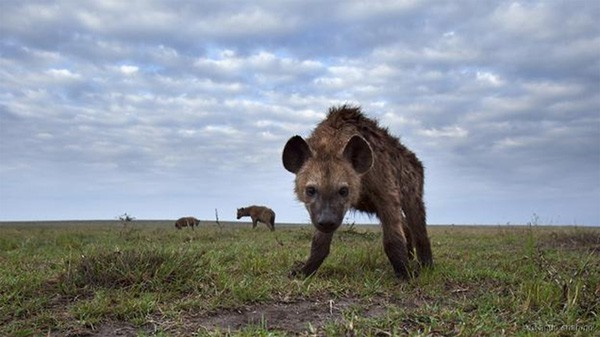 1001 thắc mắc: Những loài động vật nào bốc mùi đáng sợ nhất thế giới? - Ảnh 1.