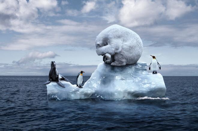 Nghiên cứu: Nam Cực đang nóng lên nhanh hơn gấp 3 lần so với phần còn lại của thế giới - Ảnh 1.