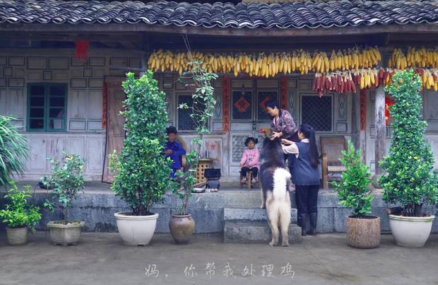 """Ngay tại Trung Quốc đã có loạt vlogger phong cách na ná Lý Tử Thất, có người còn gần như """"copy"""" nguyên si - Ảnh 4."""