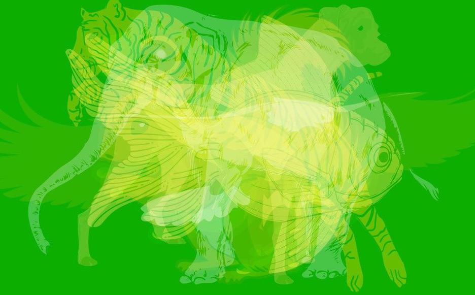 Người nhìn thấy con hổ trước tiên khác gì với người nhìn thấy con chó trước tiên?