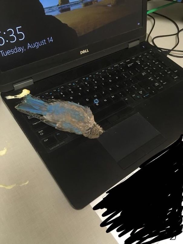 2. Đang làm việc thì tự dưng có 1 con chim đi bậy vào máy tính của tôi, chưa hết đâu, tôi còn chưa kịp bắt đền hay gì thì nó đã tự lăn ra chết luôn thế này này.