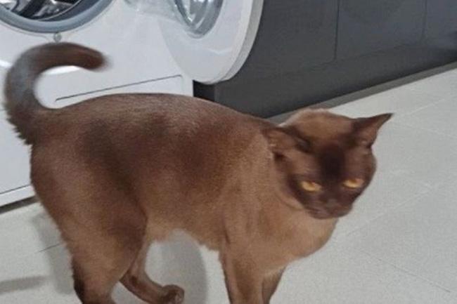Chui vào máy giặt đánh một giấc, mèo cưng không ngờ mình bị quay suốt 12 phút nhưng cái kết mới là điều bất ngờ - Ảnh 2.
