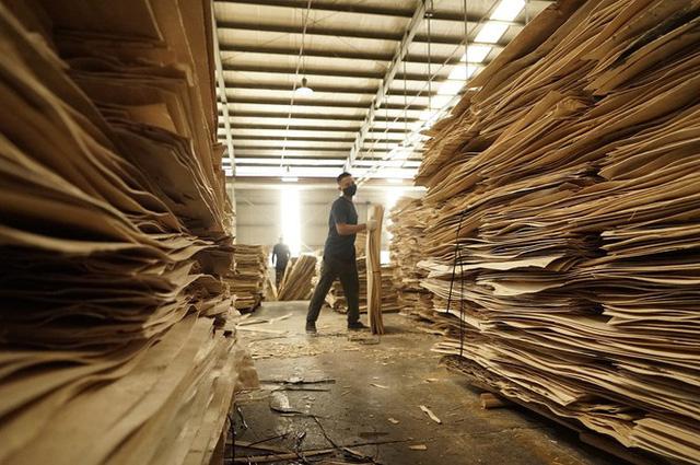 Cảnh báo luồng gỗ bất hợp pháp từ nước ngoài tuồn vào Việt Nam  - Ảnh 1.