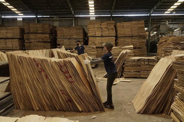 Cảnh báo luồng gỗ bất hợp pháp từ nước ngoài tuồn vào Việt Nam  - Ảnh 2.