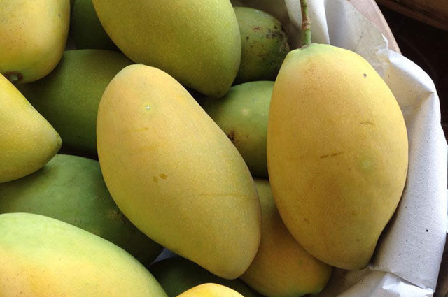 9 loại xoài cực ngon đang có mặt trên thị trường Việt, hot nhất là xoài tí hon nằm nhỏ gọn trong lòng bàn tay - Ảnh 1.