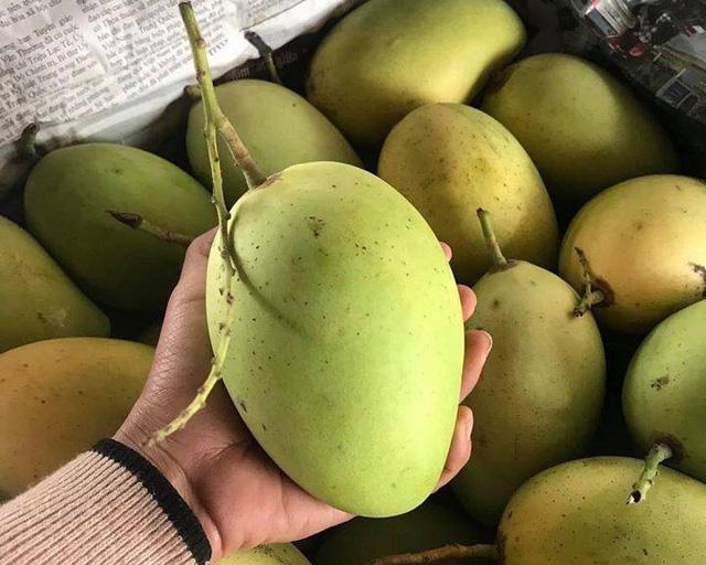 9 loại xoài cực ngon đang có mặt trên thị trường Việt, hot nhất là xoài tí hon nằm nhỏ gọn trong lòng bàn tay - Ảnh 2.