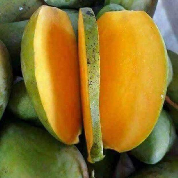 9 loại xoài cực ngon đang có mặt trên thị trường Việt, hot nhất là xoài tí hon nằm nhỏ gọn trong lòng bàn tay - Ảnh 7.