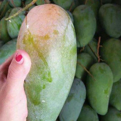 9 loại xoài cực ngon đang có mặt trên thị trường Việt, hot nhất là xoài tí hon nằm nhỏ gọn trong lòng bàn tay - Ảnh 8.