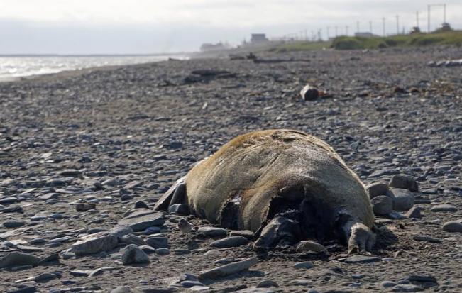 Một bệnh dịch tàn khốc đang lan tràn và tàn phá các vùng biển, không kém gì cách Covid-19 đe dọa loài người - Ảnh 4.