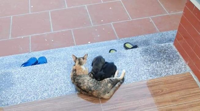 Bé gái khóc nức nở, ôm chặt chân không cho mẹ bắt mèo, tấm ảnh cuối khiến tất cả vừa thương vừa buồn cười - Ảnh 2.