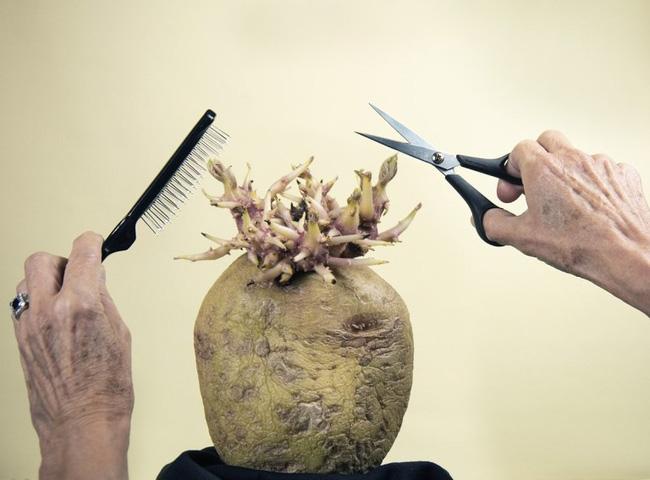 Bức ảnh cụ ông giơ kéo cắt tóc cho quái vật kỳ lạ nhưng sự thật lại khiến cư dân mạng phải bật cười - Ảnh 1.