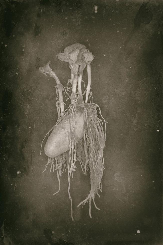 Bức ảnh cụ ông giơ kéo cắt tóc cho quái vật kỳ lạ nhưng sự thật lại khiến cư dân mạng phải bật cười - Ảnh 4.