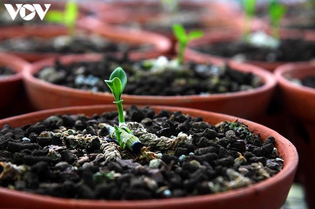 Phất lên nhanh chóng nhờ trồng loài hoa vương giả - Ảnh 2.