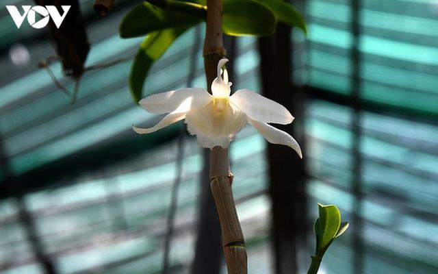 Phất lên nhanh chóng nhờ trồng loài hoa vương giả - Ảnh 6.