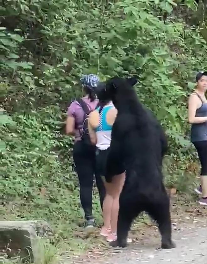 Gấu đen sàm sỡ nữ du khách: Dân tình phẫn nộ vì điều xảy ra với con gấu - Ảnh 2.