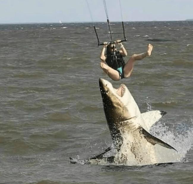 Cá mập hung tợn tấn công người chơi dù lượn khiến ai cũng chắc chắn rằng nạn nhân sẽ bỏ mạng nhưng câu chuyện thật lại khác hoàn toàn - Ảnh 1.