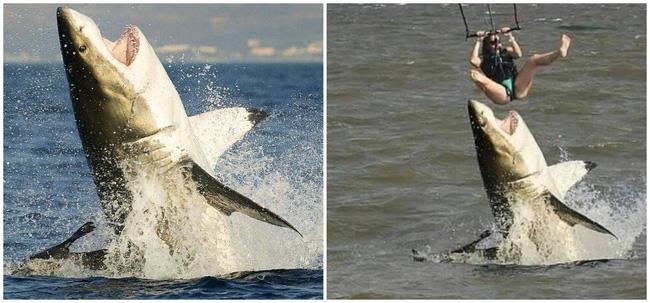 Cá mập hung tợn tấn công người chơi dù lượn khiến ai cũng chắc chắn rằng nạn nhân sẽ bỏ mạng nhưng câu chuyện thật lại khác hoàn toàn - Ảnh 2.