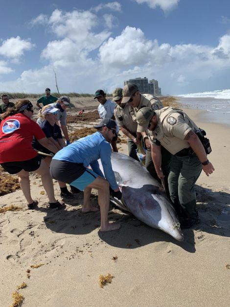 Tìm thấy cả thuốc diệt cỏ trong xác cá heo và cá voi mắc cạn - Ảnh 2.