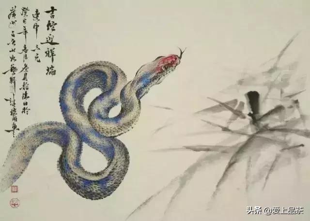 Cứu 1 con rắn rồi đem về nhà nuôi, người đàn ông không ngờ có ngày mất mạng: Lý do thật sự phía sau khiến nhiều người giật mình - Ảnh 4.