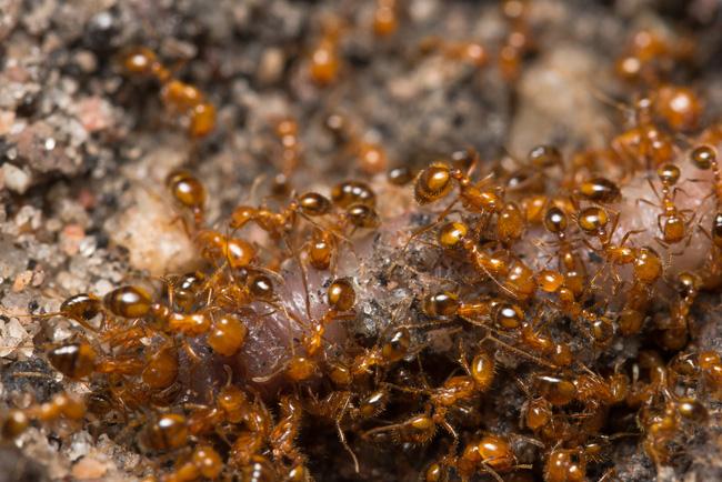 Pha thoát chết kỳ lạ nhưng may mắn nhất quả đất: Nhảy dù rơi trúng tổ kiến lửa, tưởng họa lại hóa thành may vì được kiến cắn - Ảnh 4.