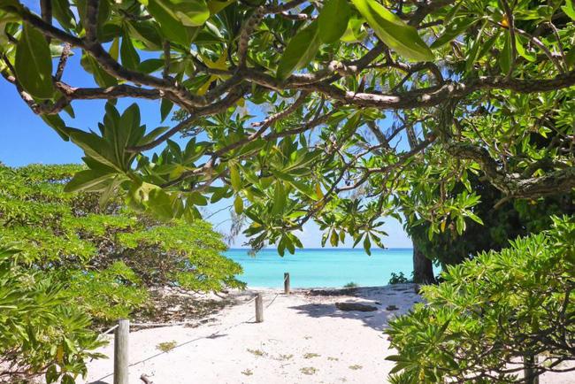 Chuyện về Cô gái Tarzan sống đơn độc trên đảo hoang, bị truyền thông phát hiện thì lập tức lẩn trốn không để lại dấu vết suốt 50 năm - Ảnh 4.