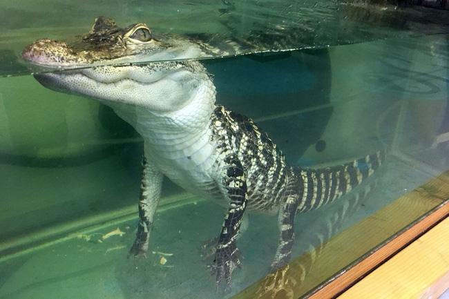 Cá sấu nổi lềnh bềnh ai cũng sợ nhưng hình ảnh dưới mặt nước lại phản bội sự hung tợn của chúng, thậm chí còn có phần đáng yêu - Ảnh 5.