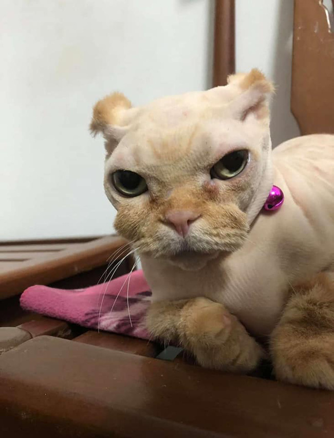 Đang yên đang lành bị đem ra làm lông, bộ dạng sau đó của mèo khiến dân tình sửng sốt: Cái râu cái tóc là góc con mèo! - Ảnh 3.