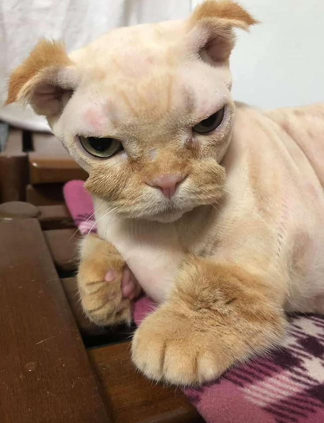 Đang yên đang lành bị đem ra làm lông, bộ dạng sau đó của mèo khiến dân tình sửng sốt: Cái râu cái tóc là góc con mèo! - Ảnh 4.