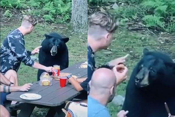 Cả gia đình đi picnic, chú gấu hồn nhiên đến xin ăn, ngồi 'nhậu' như người nhà - Ảnh 2.