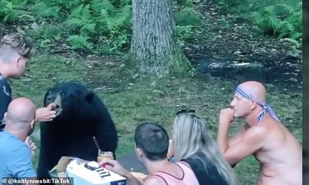 Cả gia đình đi picnic, chú gấu hồn nhiên đến xin ăn, ngồi 'nhậu' như người nhà - Ảnh 3.