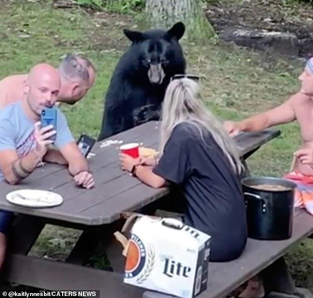Cả gia đình đi picnic, chú gấu hồn nhiên đến xin ăn, ngồi 'nhậu' như người nhà - Ảnh 4.
