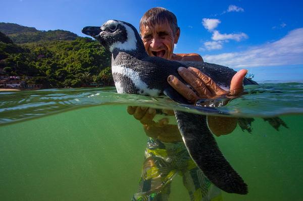 Những sự thật thú vị về chim cánh cụt khiến bạn phải ố á, hóa ra loài vật dễ thương này còn có cả kho tàng chuyện hài hước - Ảnh 2.