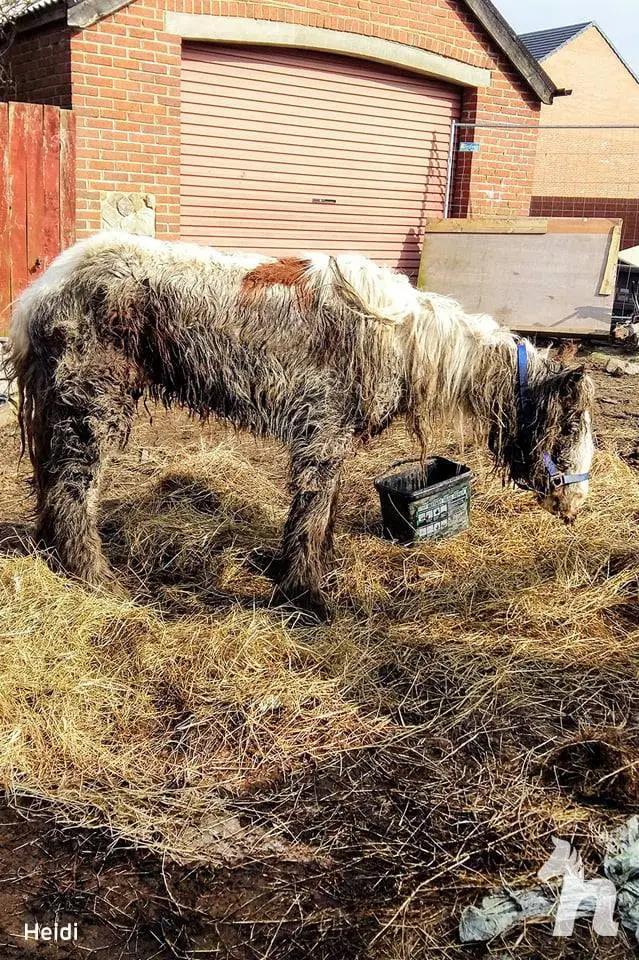 Cuộc lột xác thần kỳ của chú ngựa Pony: Từ xác khô trộn bùn đến tấm thân đẹp rực rỡ - Ảnh 2.