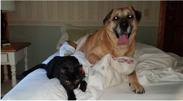 Cô chó may mắn thoát khỏi trận hỏa hoạn, 2 tháng sau dẫn gia đình đến chiếc lỗ nhỏ dưới sàn nhà chứa đựng điều kỳ diệu - Ảnh 1.