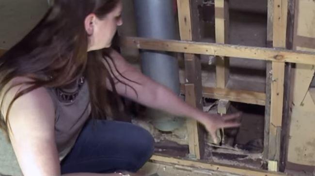 Cô chó may mắn thoát khỏi trận hỏa hoạn, 2 tháng sau dẫn gia đình đến chiếc lỗ nhỏ dưới sàn nhà chứa đựng điều kỳ diệu - Ảnh 2.