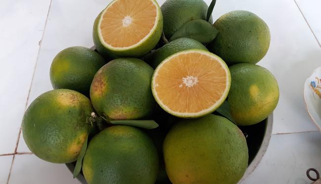 Điểm mặt gọi tên các loại cam và cách chọn cam chuẩn xịn nhiều nước ngọt thơm nhất - Ảnh 5.
