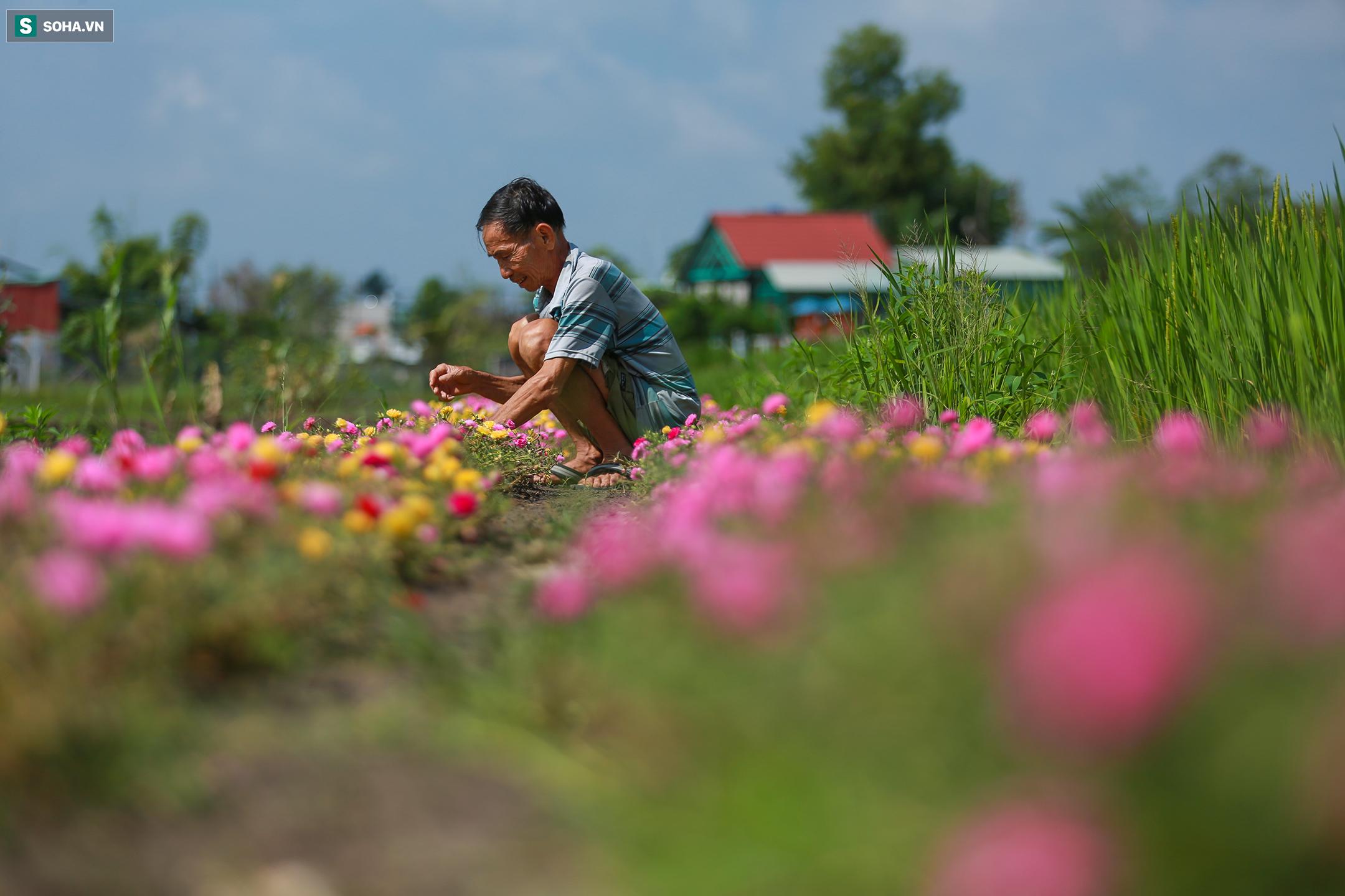 [Ảnh] Con đường hoa mười giờ len lỏi giữa đồng lúa xanh đẹp như tranh ở Sài Gòn - Ảnh 10.