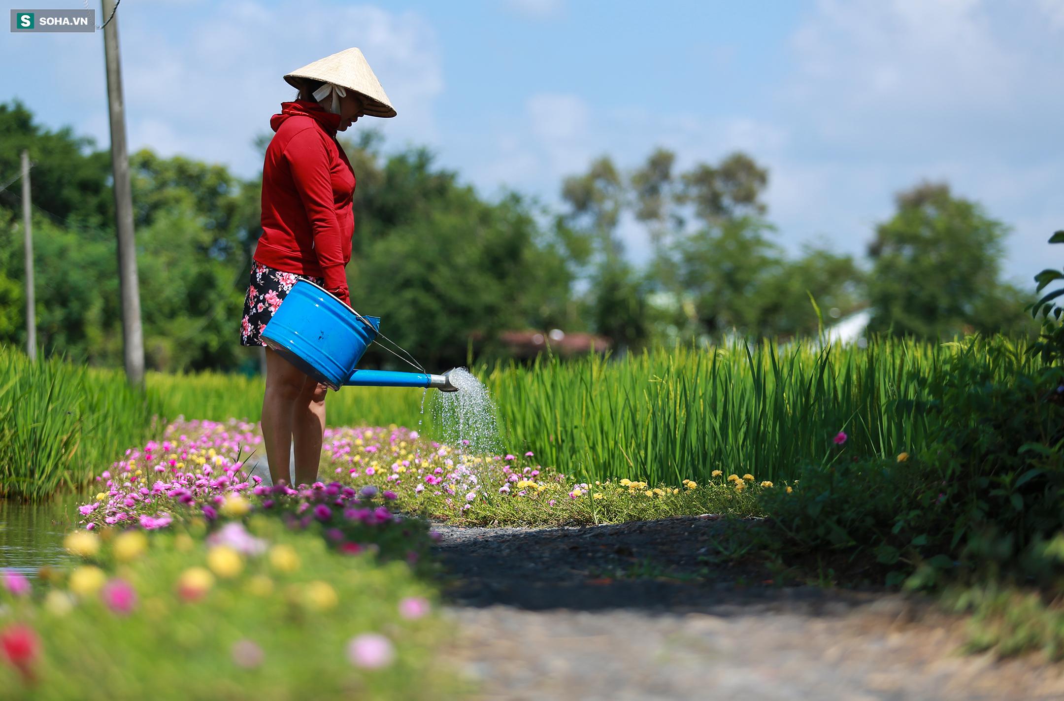 [Ảnh] Con đường hoa mười giờ len lỏi giữa đồng lúa xanh đẹp như tranh ở Sài Gòn - Ảnh 3.