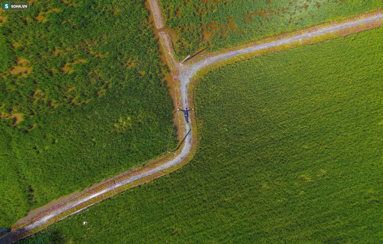 [Ảnh] Con đường hoa mười giờ len lỏi giữa đồng lúa xanh đẹp như tranh ở Sài Gòn - Ảnh 2.