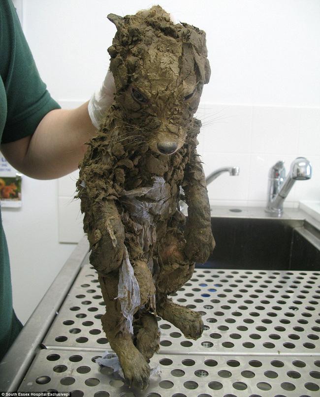 Phát hiện con vật như cún con cứng đơ trong bùn đất, công nhân vội vã mang đến bệnh viện và ngã ngửa khi biết danh tính thật - Ảnh 1.