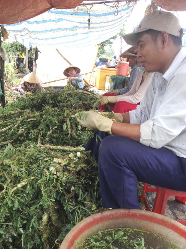 35 năm trồng cây rau dại toàn thân đeo phao trắng, ngày nào cũng cắt bán nửa tạ, bỏ túi 1 triệu - Ảnh 2.