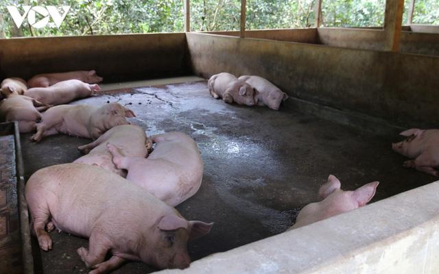 Giá thành chăn nuôi lợn hiện khoảng 50.000 - 71.000 đồng/kg - Ảnh 1.