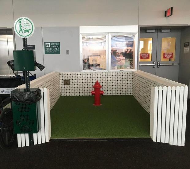 Phòng tắm cho các chú chó hướng dẫn tại sân bay.