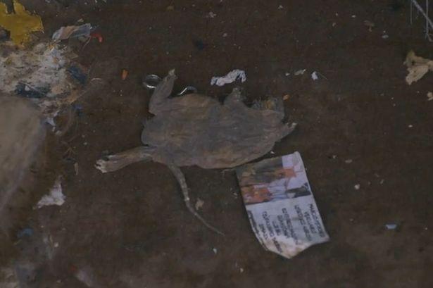 Bên trong căn hộ nhiều rác nhất Anh quốc: Chuột vào rồi đành bỏ mạng vì không có đường ra - Ảnh 2.