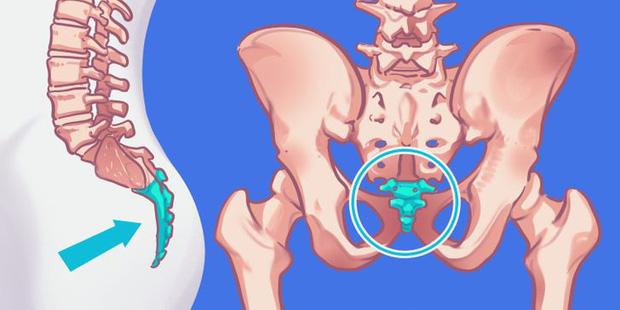 9 bộ phận vô dụng đến thảm thương trên cơ thể chúng ta, nhưng lại là bảo chứng sinh tồn của quá trình tiến hóa - Ảnh 1.