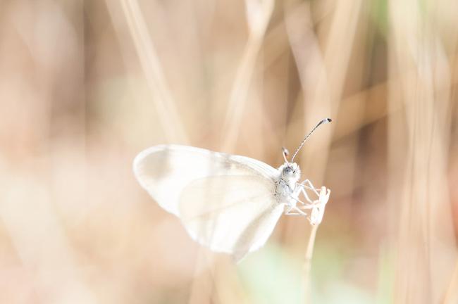 Trắc nghiệm tâm lý: Hành trình con bướm trắng và khám phá bí mật cuộc sống nửa cuối năm 2020 của bạn - Ảnh 1.