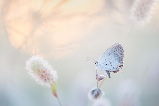 Trắc nghiệm tâm lý: Hành trình con bướm trắng và khám phá bí mật cuộc sống nửa cuối năm 2020 của bạn - Ảnh 3.
