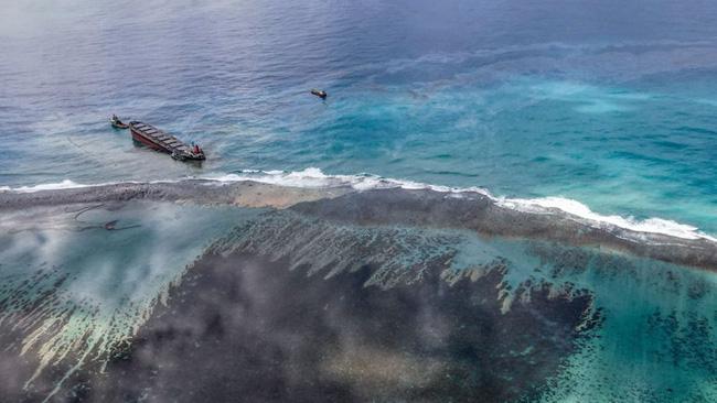 Cá heo con chết trên biển bị tràn dầu, cá heo mẹ vẫn cố đẩy đầu con lên khỏi mặt nước rồi qua đời theo con không lâu sau đó - Ảnh 2.