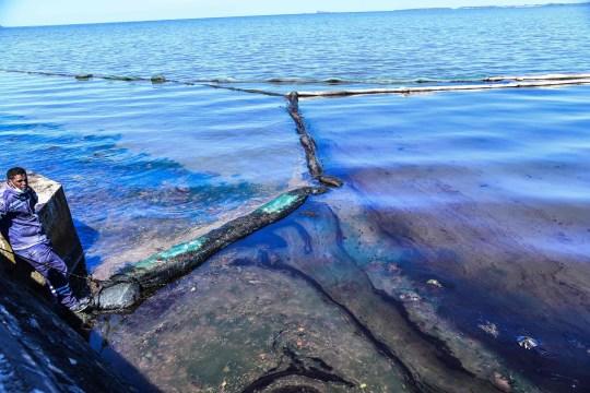 Cá heo con chết trên biển bị tràn dầu, cá heo mẹ vẫn cố đẩy đầu con lên khỏi mặt nước rồi qua đời theo con không lâu sau đó - Ảnh 4.